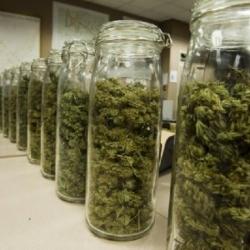 Medical-Marijuana_iPharmaCongress